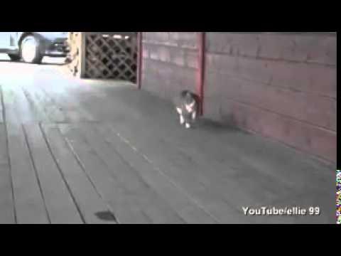 軽快な音楽にのせて馬のように歩く猫