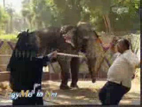 مواقف مضحكة ....طرائف مع الفيل