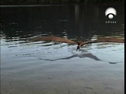 Parque Prehistórico - Capítulo 3/6 - Las Aves Dinosaurio 1/5