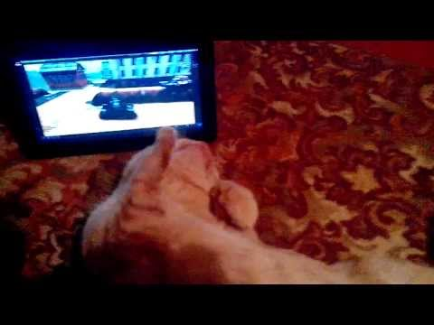 Кот смотрит видео про Танки Онлайн