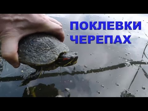 рыбалка на червя на поплавочную