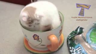 If it fits, I sits   Funny and cute animal compilation