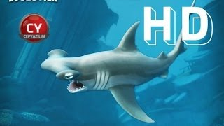Hungry Shark Evolution - Hammerhead Shark (Gameplay)
