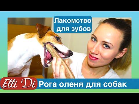 Лакомство для собак - рога, уход за зубами собаки. Конкурс от Elli Di.