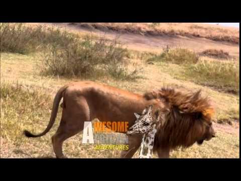 Awesome African Adventures Tanzania / Serengeti