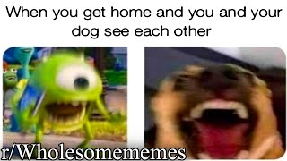 r/Wholesomememes | good memes for good boys