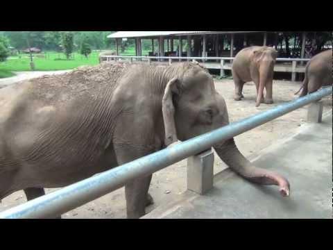 The Shabby Shack at the Elephant Rescue Park Chiang Mai Thailand