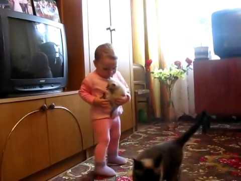 кошка забрала котенка - Cat kitten took