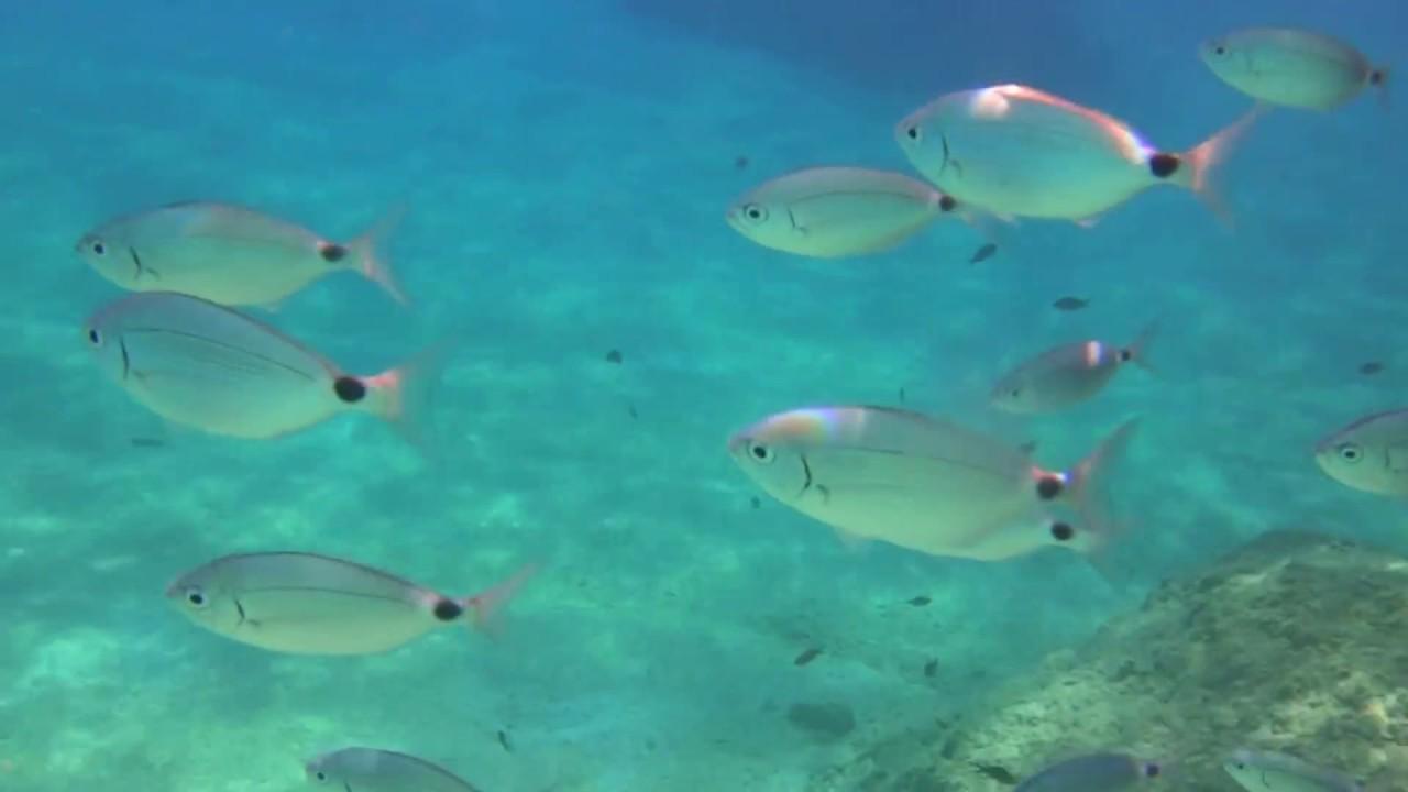Underwater 2015