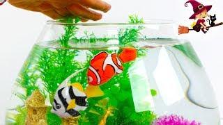 Decoramos un Aquarium con Plantas y Juguetes