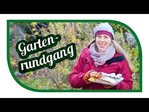Gartenrundgang November ❄️ erster Frost im Garten ❄️