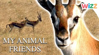 My Animal Friends - Glorious Gazelles | Full Episode | Wizz | TV Show for Kids