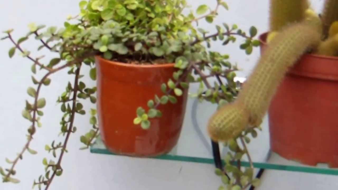Repisa para las plantas youtube - Estanteria para plantas de interior ...