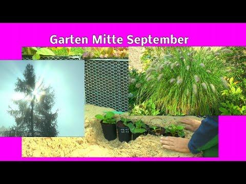 Garten mitte September Rundgang Hortensien Stecklinge auf den Winter vorbereiten Gemüse allerlei im