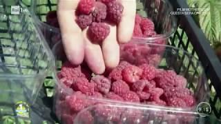 La coltivazione dei frutti rossi - Unomattina Estate 05/08/2019