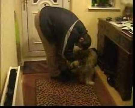 Star the Tibetan Terrier (Daddys Home !!)