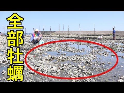 【取り放題!】カキが無限にとれる干潟の状況がすごかった。