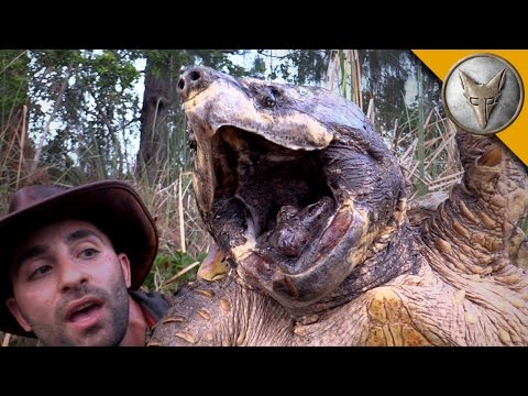 The BIGGEST Turtle You've EVER seen!