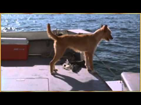 dolphin-and-dog-lets-be-friendsflv.html