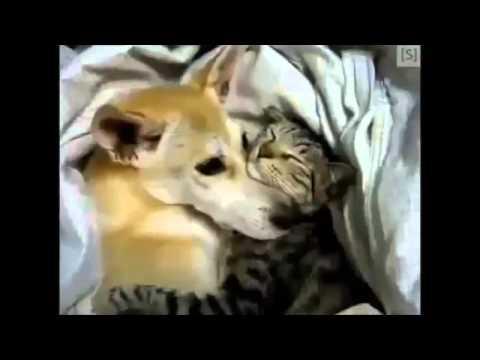 ПРИКОЛЫ 2013 про животных 114 Юмор! Прикол! Смех