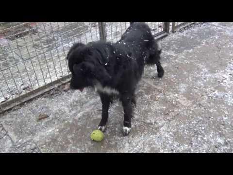 Göttinger Tierheim: Tiere suchen ein neues Zuhause