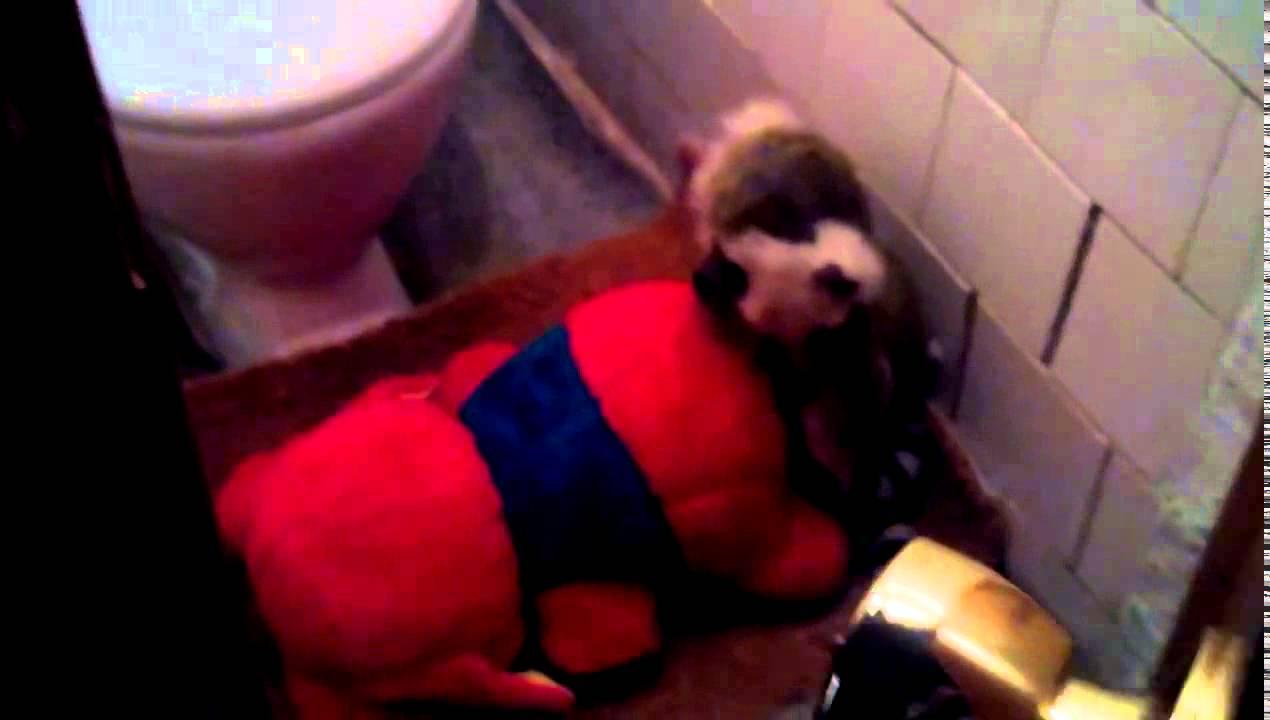 Съемки в женском туалете онлайн бесплатно 16 фотография