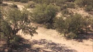 Cactus Jack - O Vilão - Filme Completo - Dublado