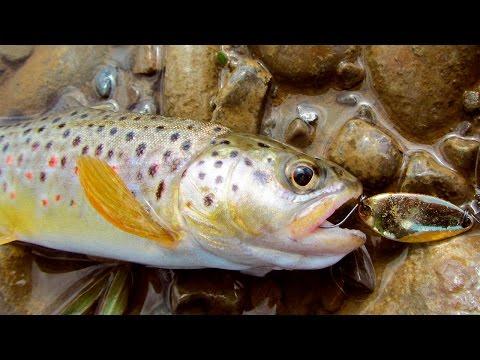 приманки для ловли форели на малых реках