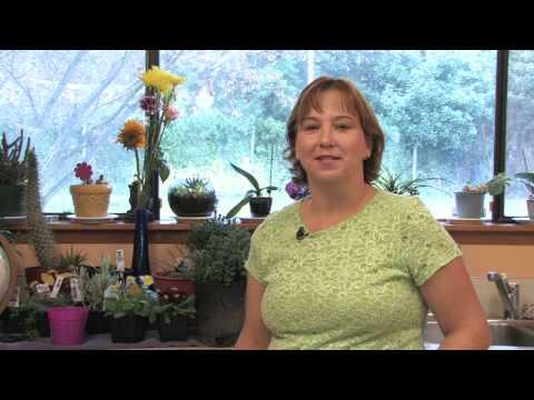 Flower Gardening Tips : How to Grow Lemon Balm