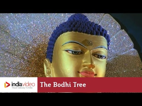 The Bodhi tree and the Mahabodhi Temple Complex, Bodh Gaya