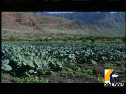 Oahu Farm's Organic Produce Impacts Hawaii's Youth