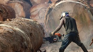 The Risky Life Of Lumberjack - World Documentary Films HD