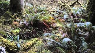 2015  Lake Quinault Rain Forest xxx