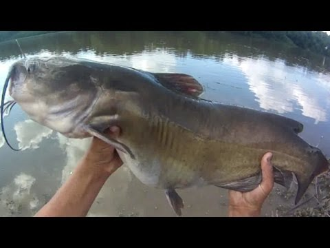 Bait Fishing #60 - River Fishing for Big Channel Catfish with Shrimp, Worms, and Hotdogs