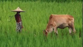 Bangladesher gan