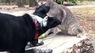 Funny Pet Videos - Funny Cats VS Dogs - Funny Pet Videos