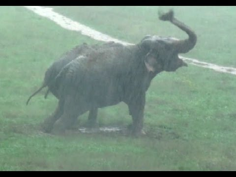 Thunderstorms at The Elephant Sanctuary in Tennessee