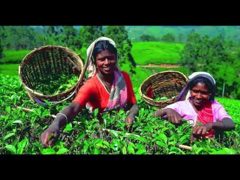 Ceylon tea is best