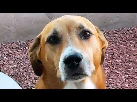 «Дайте мне самого несчастного и ненужного пса!», — попросила девочка #СПАСЕНИЕЖИВОТНЫХ