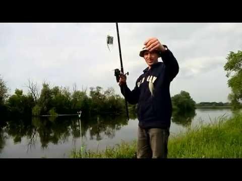 рыбалка гинеевка видео