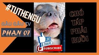 Tổng hợp các tư thế ngủ hài hước và đáng yêu của chó mèo #7  | Funny Dogs and Cats Sleeping #7