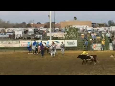 West Hills College Coalinga Calf Dressing 2014