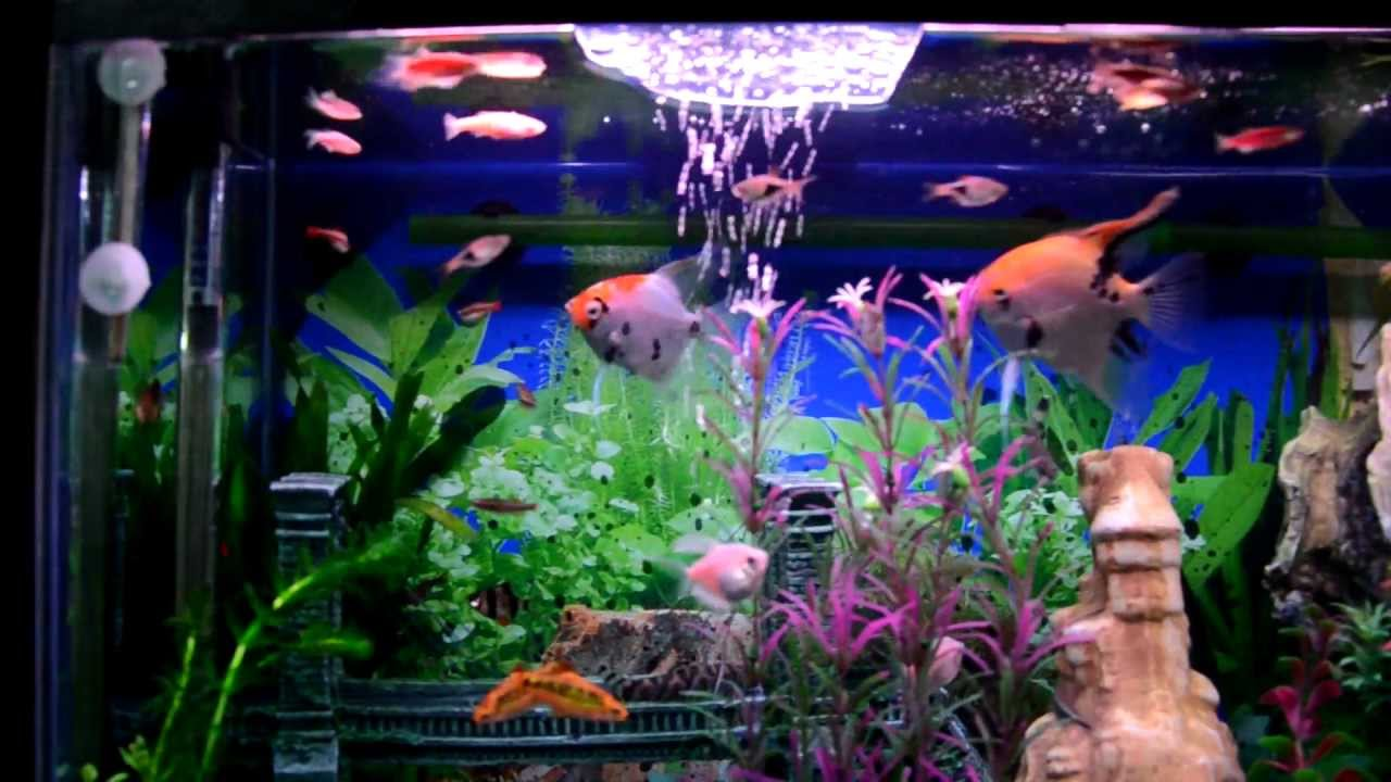 Mi acuario peces de aguas tropicales 150 litros hd iv for Red para peces de acuario