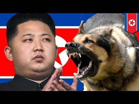 Kim Jong Un orders uncle to be fed to dogs!