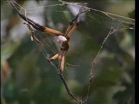 Lake Tawakoni State Park, TX - Spider Frenzy [Official]