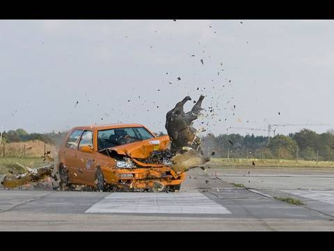 "ADAC-Crashtest: Wildunfälle ""saugefährlich"""