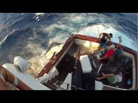 600lb Black Marlin Jumps in Boat and Lands on the Crew!  Captured on 4 different cameras! Very Scary