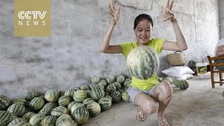 Fruit or football? Bouncy watermelons 'spring' in China