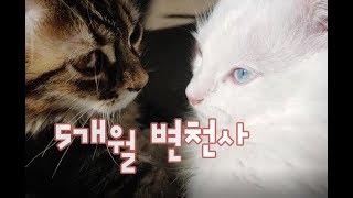 5개월되었어요! 이동장으로본 아깽이 변천사!! 귀여운고양이동영상