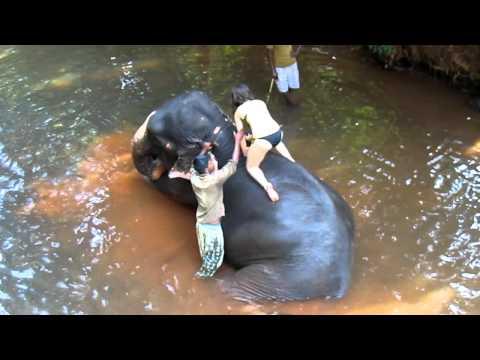 Девушка и Слон девушка на слоне клип.